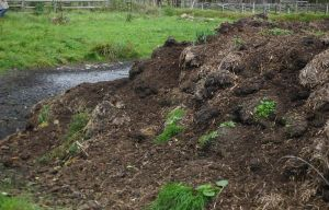 Dung Heap is smelly and dirty